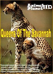 Королевы саванны / Queens Of The Savannah (2009)