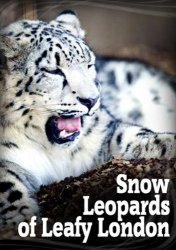 Снежный барс в зелёном Лондоне / Snow Leopards of Leafy London (2013)