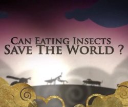 BBC: ����� �� ������� ���������� ������ ���? / BBC: Can Eating Insects Save the World? (2013)